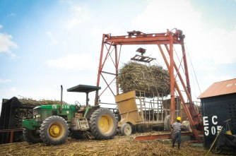 Weighing sugarcane