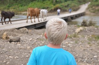 This boy could watch cattle all day